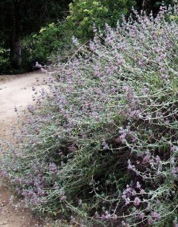 TRCD native plant sale